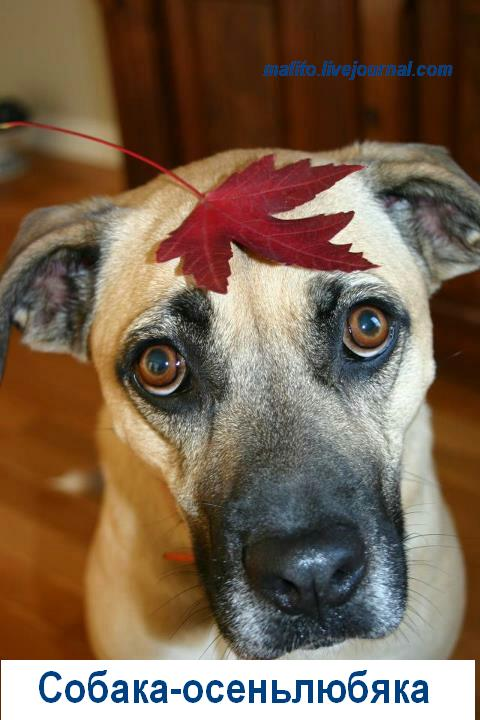 Собака-улыбака (14)