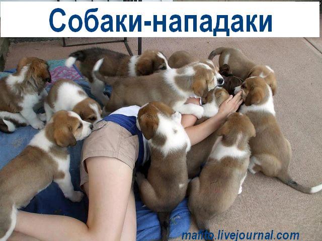 Собака-улыбака (15)