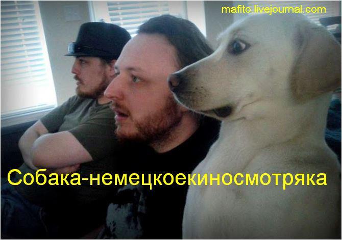 собаки-улыбаки (1)