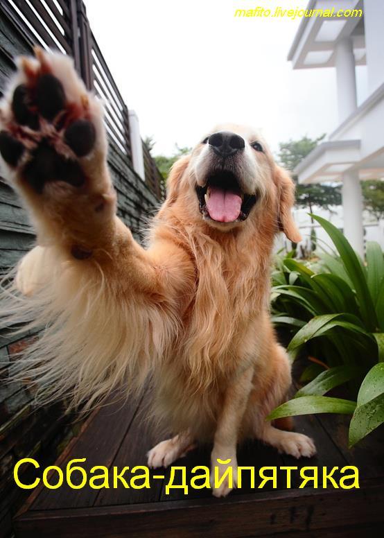 собаки-улыбаки (7)