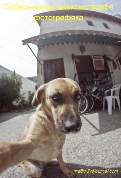 собаки-улыбаки (9)