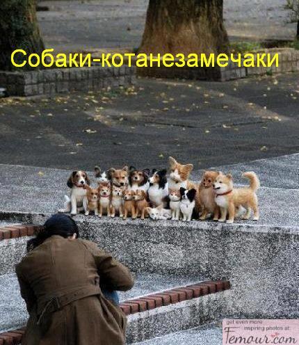 собаки-улыбаки (10)