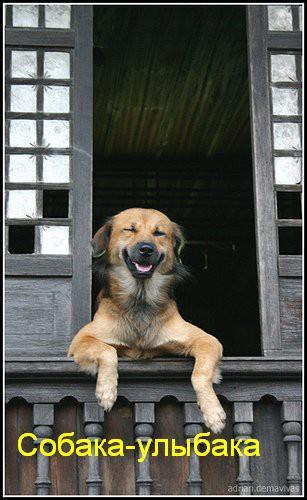 собаки-улыбаки (14)