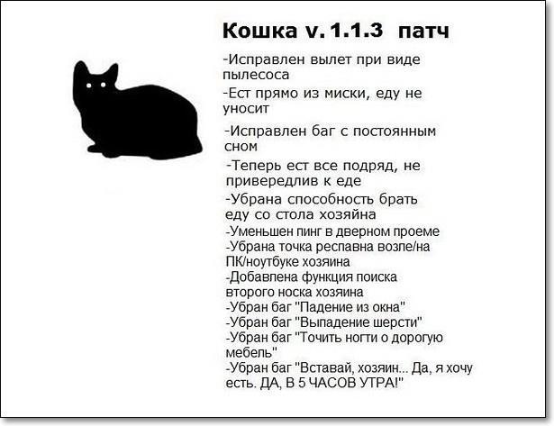 котэ (16)