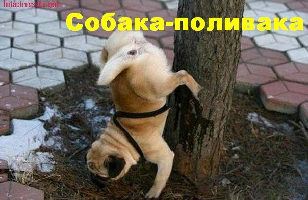 собаки-улыбаки (6)