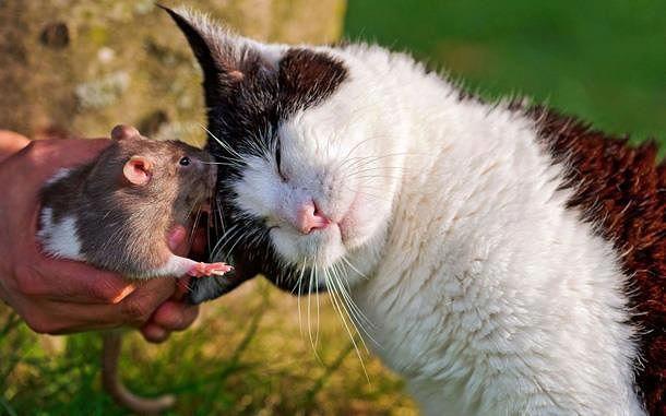 котэ коты котейки (3)