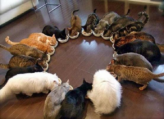 котэ коты котейки