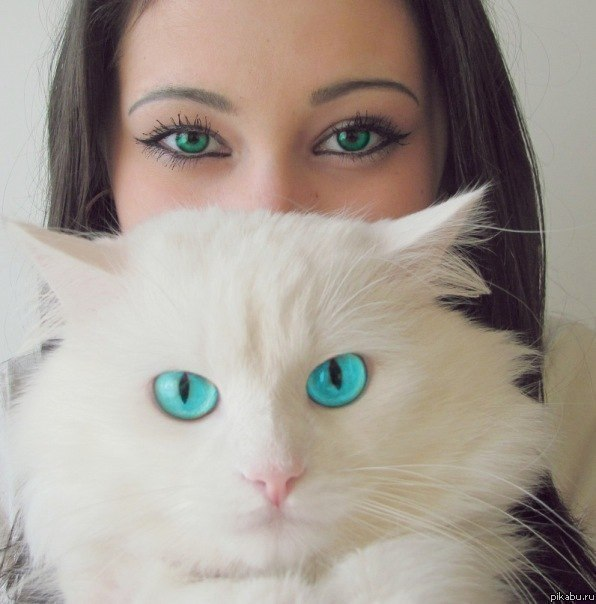 котэ коты котейки (2)