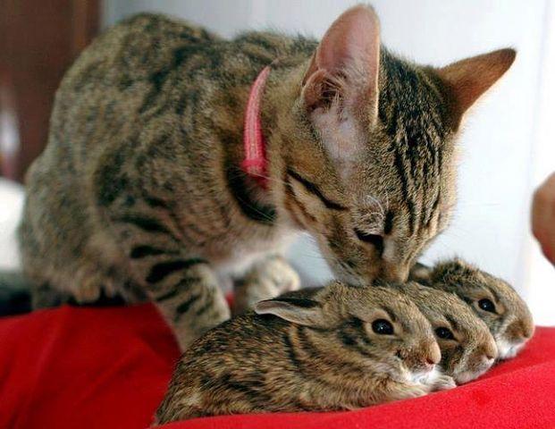 котэ коты котейки (5)