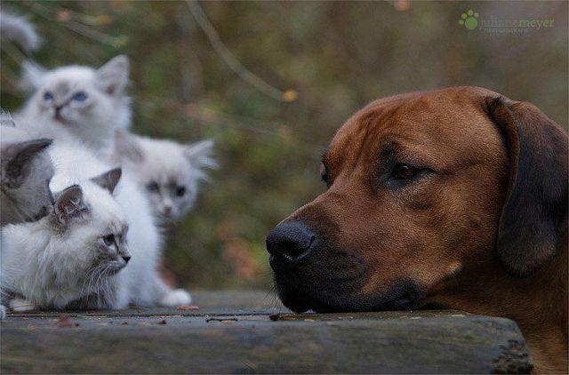 котэ коты котейки (6)