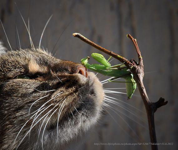 котэ коты котейки (9)