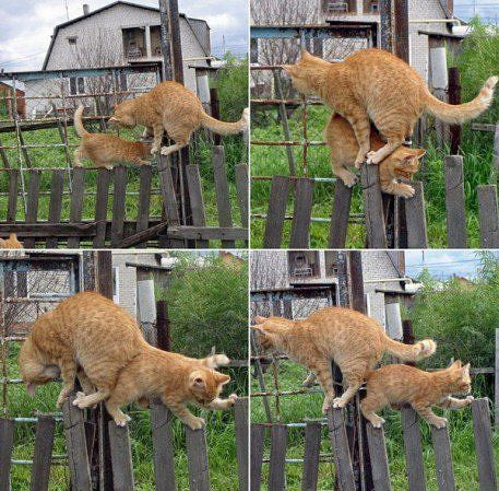 котэ коты котейки (12)