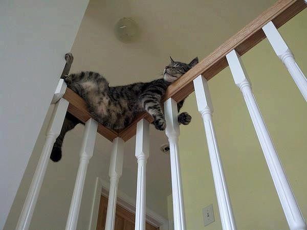 котэ коты котейки (13)