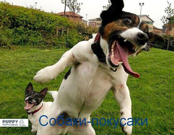 собаки-улыбаки (2)