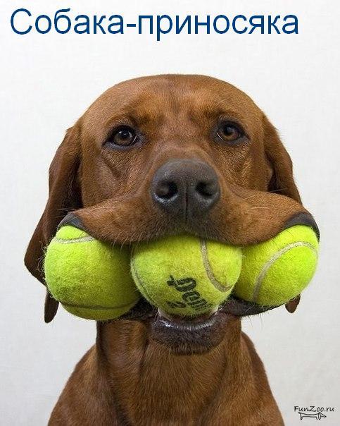 собаки-улыбаки (4)