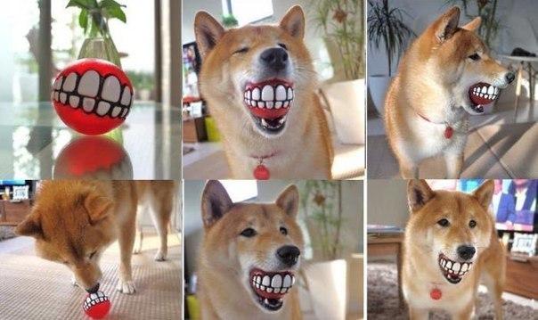 собаки-улыбаки (8)