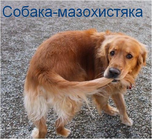 собаки-улыбаки (11)
