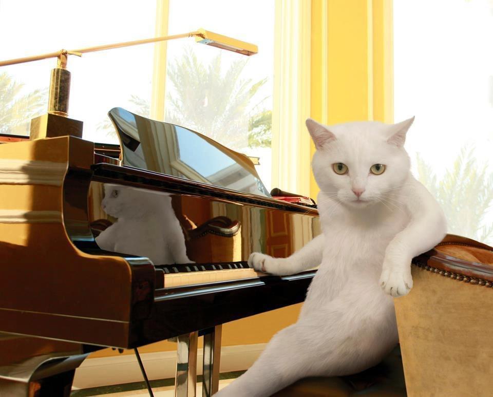 котэ коты котики (4)