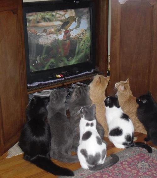 котэ коты котики (7)