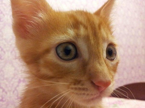 котэ коты котики (10)