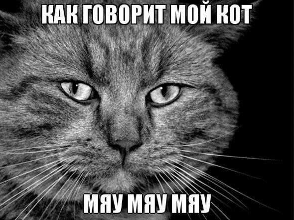 котэ коты котики (11)
