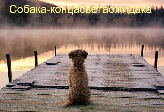 собаки улыбаки (10)
