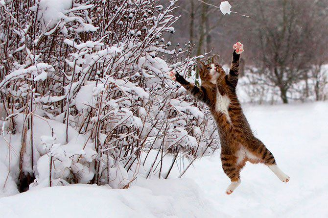 christmas сcats (2)