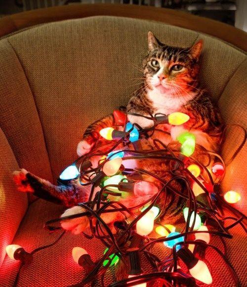 christmas сcats (4)