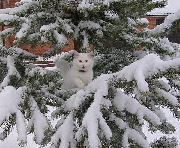 christmas сcats (6)