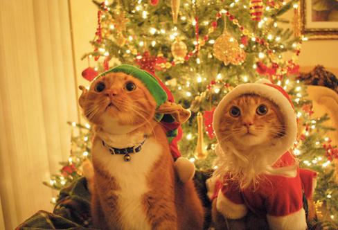 christmas сcats (8)