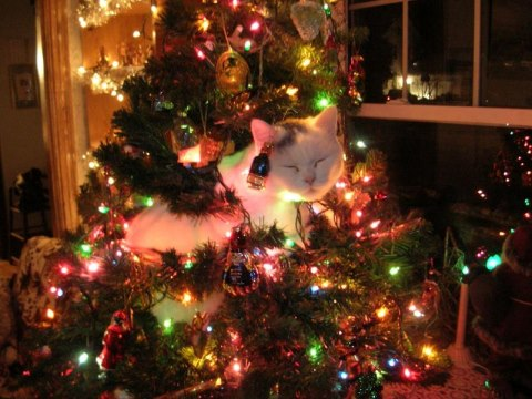 christmas сcats (9)