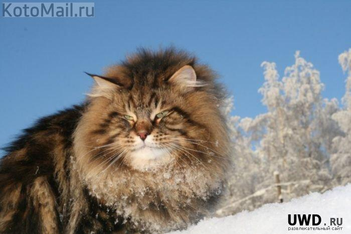 christmas сcats (10)