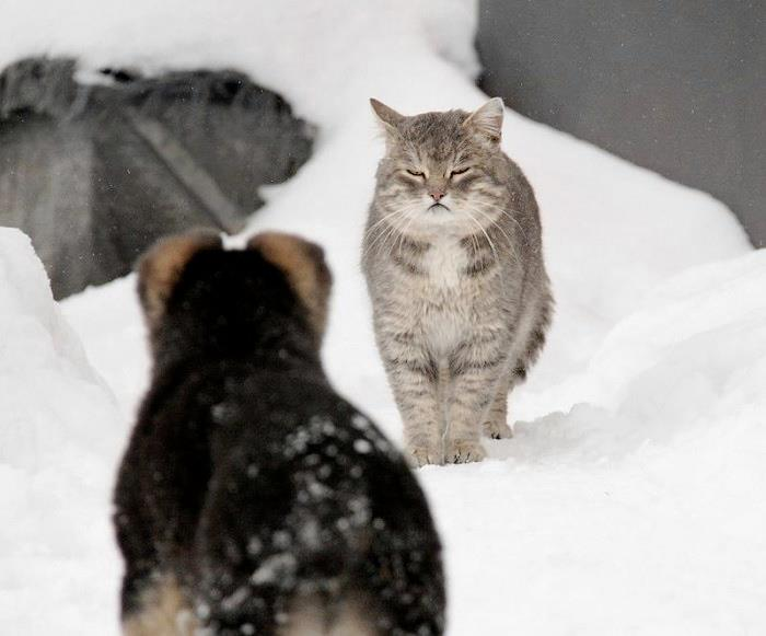 christmas сcats (11)