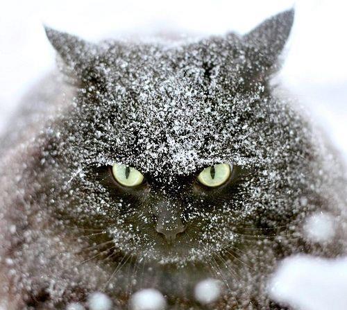 christmas сcats (13)