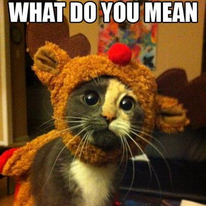christmas сcats (14)