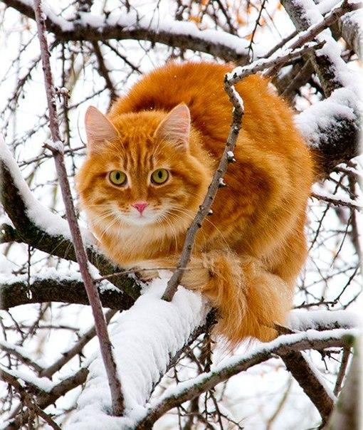 christmas сcats (17)