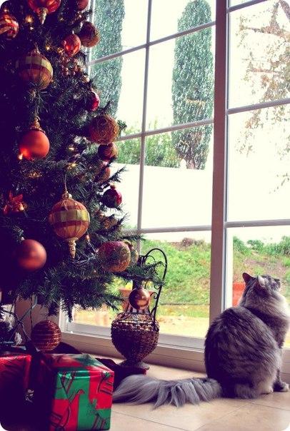 christmas сcats (21)