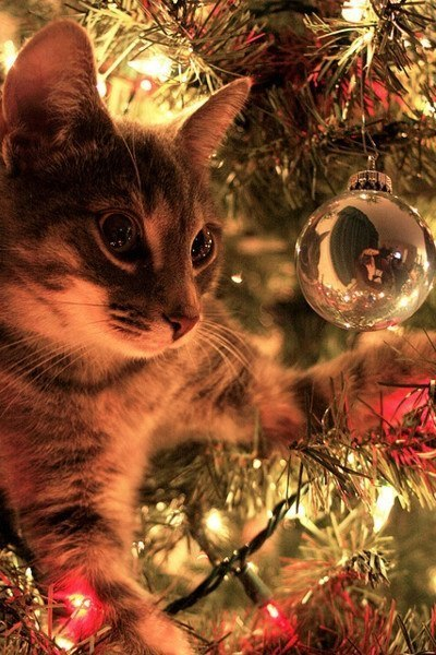 christmas сcats (22)