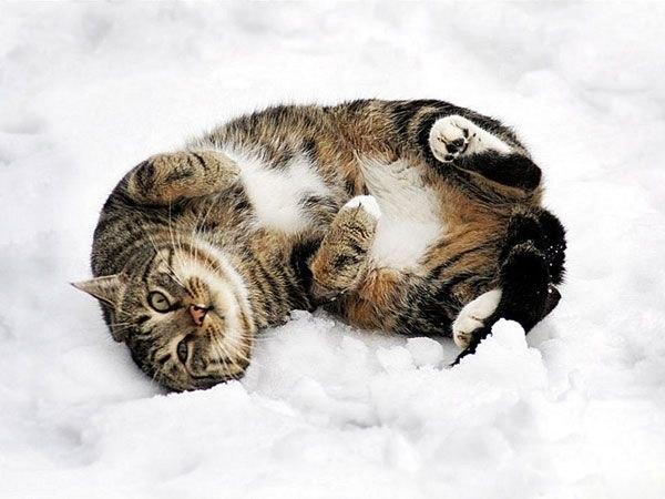 christmas сcats (23)