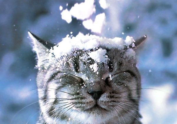 christmas сcats (24)