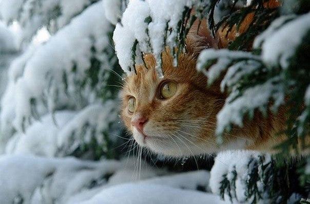 christmas сcats (25)