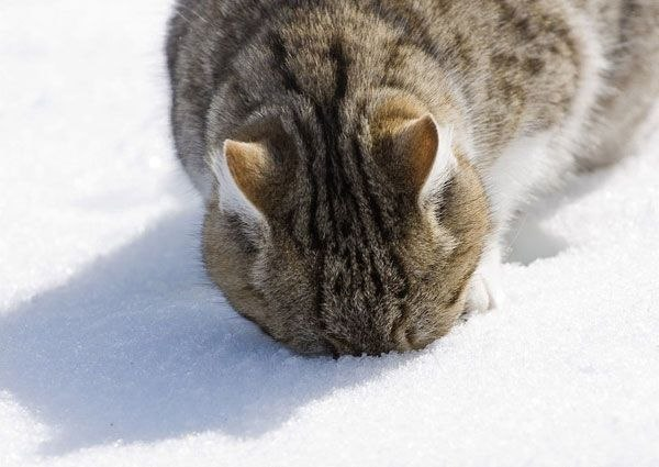 christmas сcats (27)