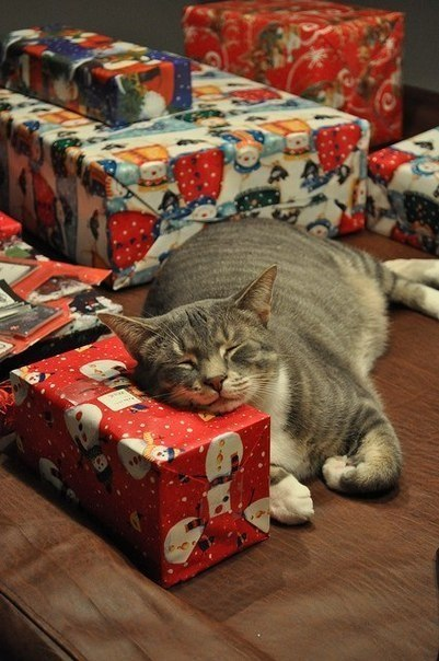 christmas сcats (29)