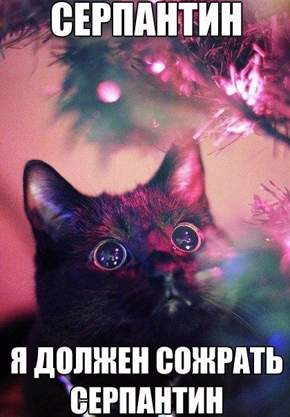 christmas сcats (31)