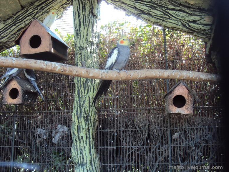 отель Sea Gull зоопарк (1)
