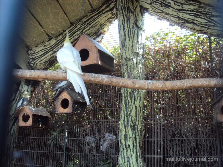 отель Sea Gull зоопарк