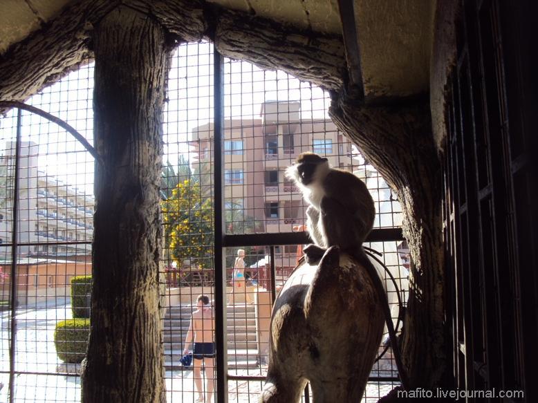 отель Sea Gull зоопарк (2)