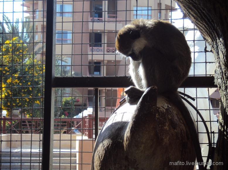 отель Sea Gull зоопарк (5)