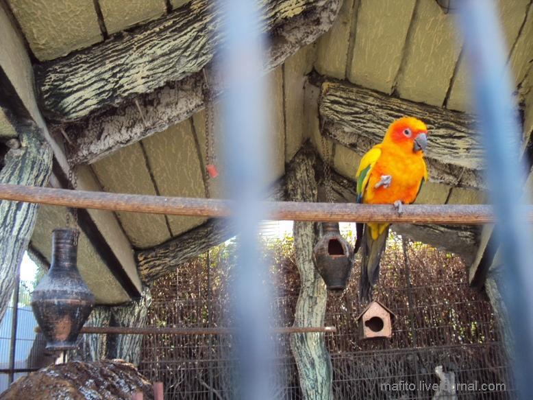 отель Sea Gull зоопарк (11)
