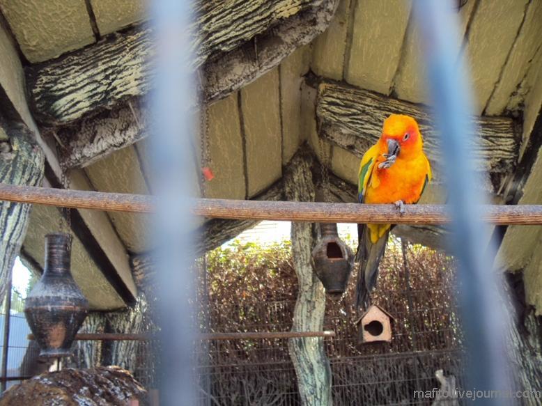 отель Sea Gull зоопарк (12)